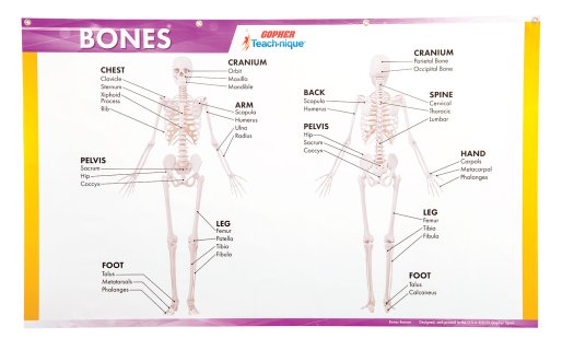 Teach-nique™ Bones Instructional Banner